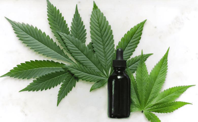 Reglamento de cannabis medicinal: Cinco datos para conocer su importancia