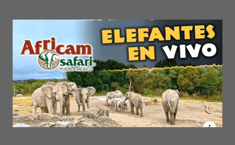 ¡Animales en vivo! Africam Safari transmite el día a día de sus especies