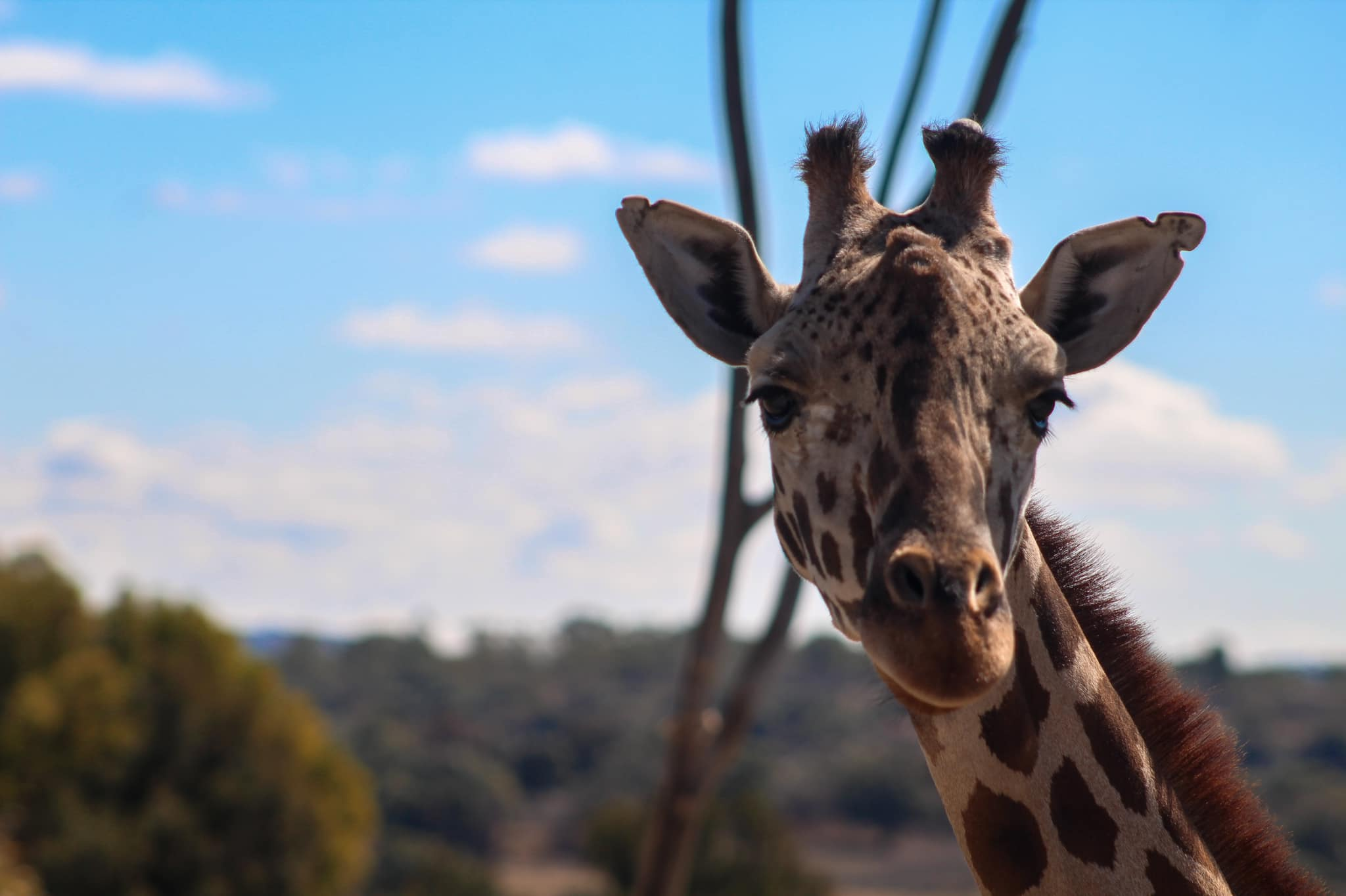 ¿Cuándo y a qué hora puedes visitar Africam Safari?