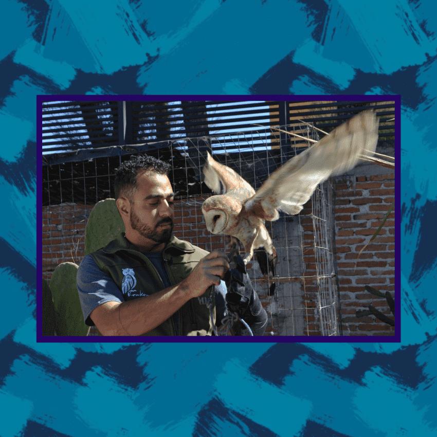 Un refugio para proteger aves en la BUAP