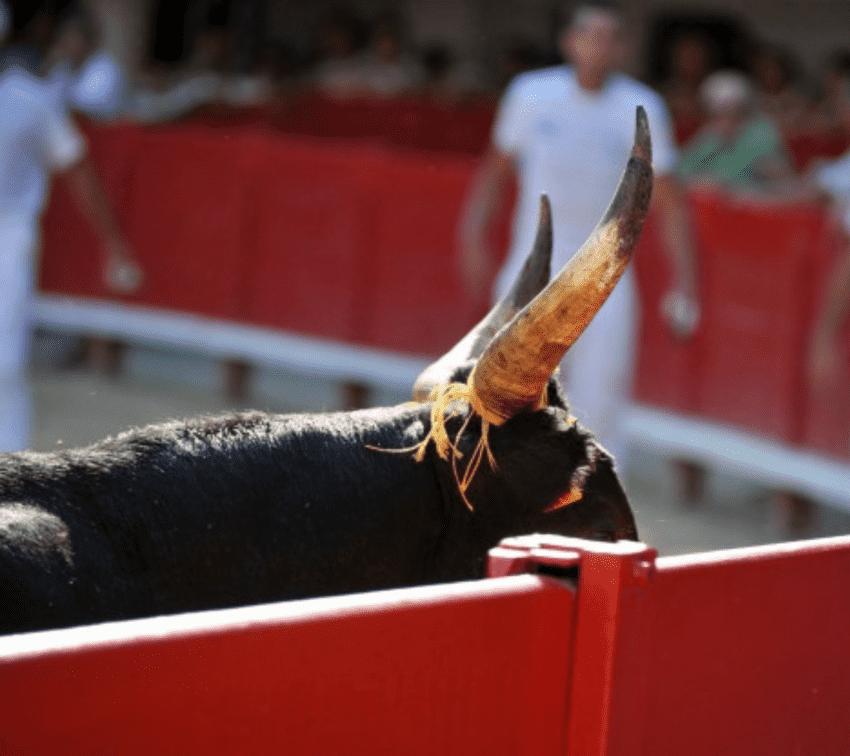 Analizan regidores prohibición de corridas de toros en la ciudad de Puebla