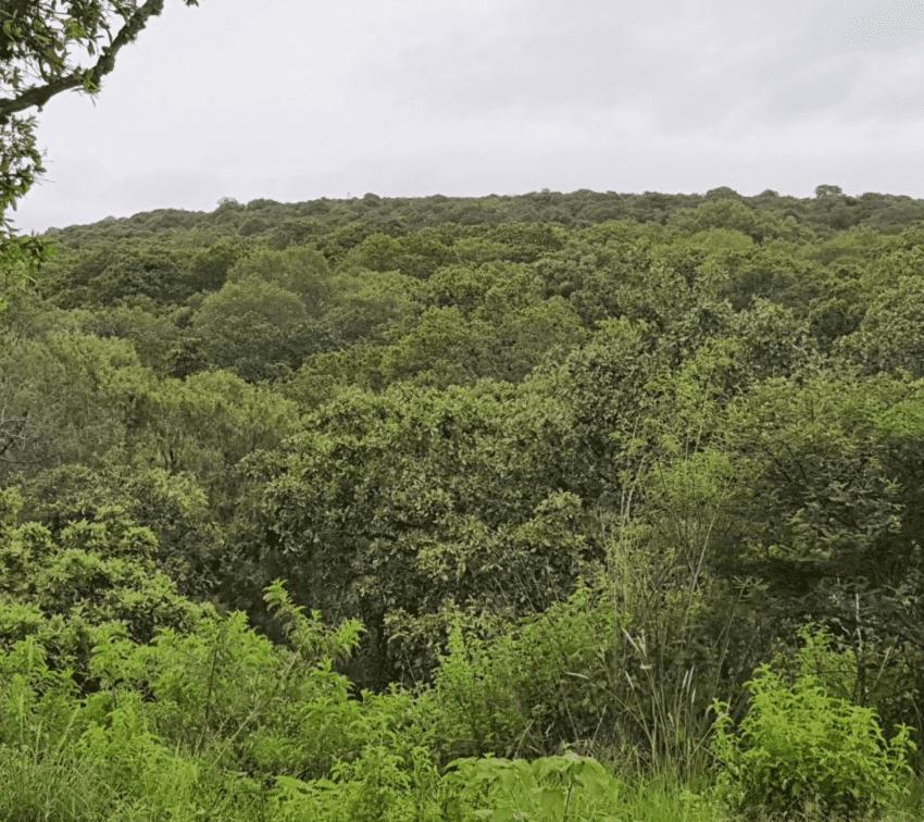 """Flor del Bosque, """"el último pulmón de Puebla"""", será reserva protegida"""