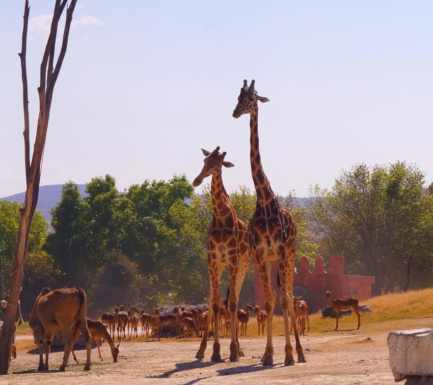 ¡A pedalear! Recorre Africam Safari en bicicleta
