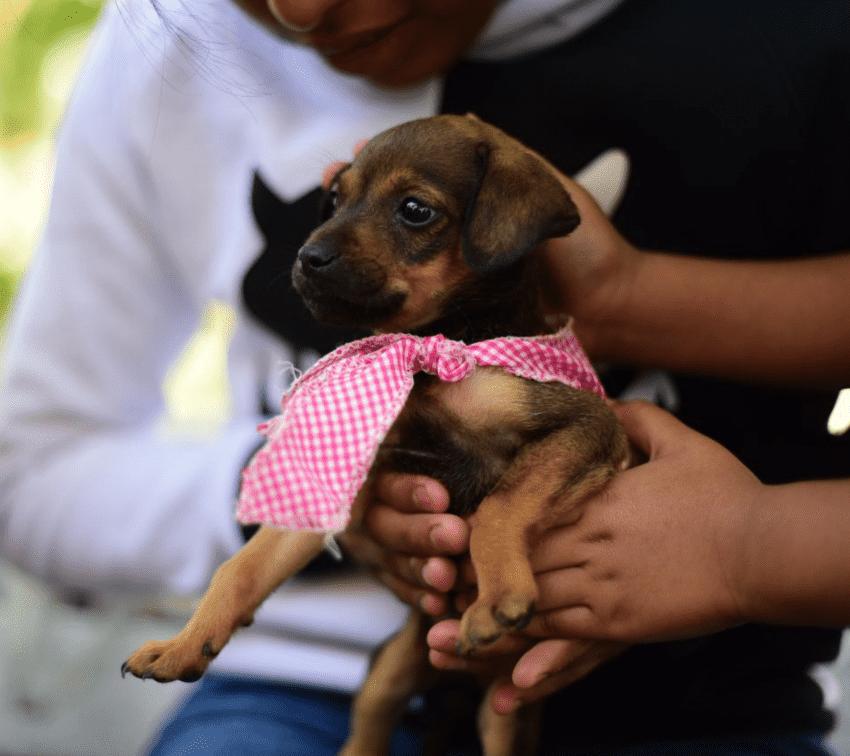 Invitan a participar en encuesta sobre el bienestar animal