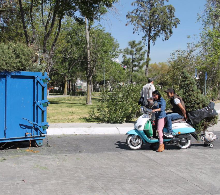 Lugares en Puebla para reciclar tu árbol de navidad