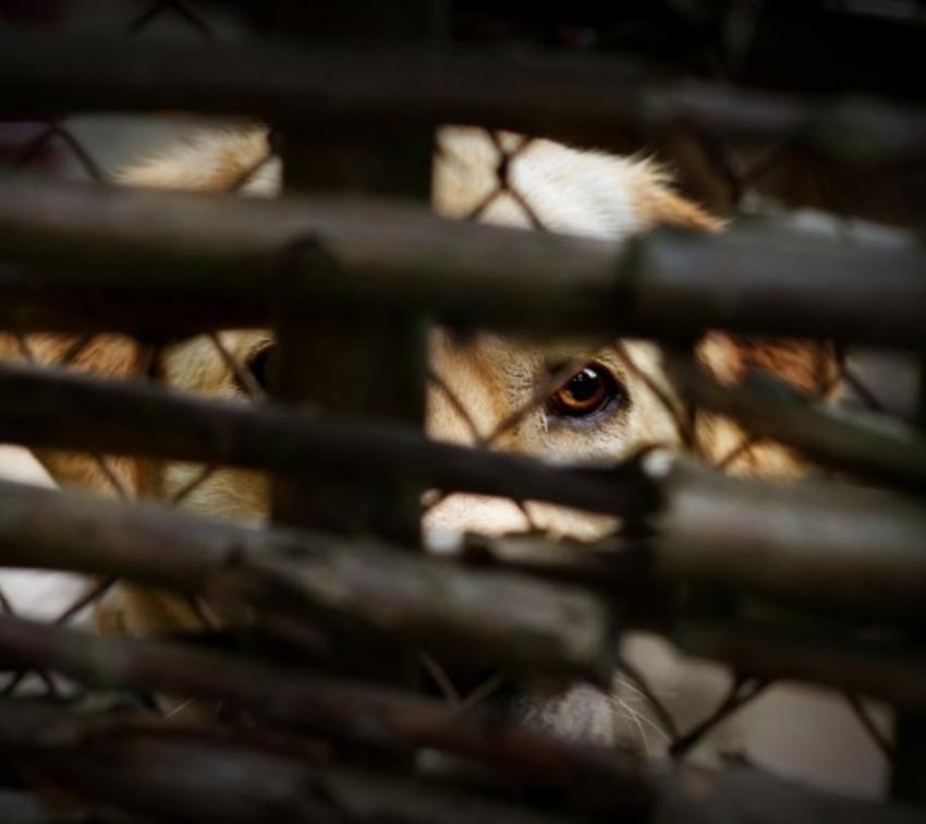 Aplican primera sanción por maltrato animal en Puebla