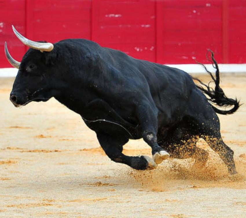 Cabildo de Puebla rechaza la prohibición de corridas de toros