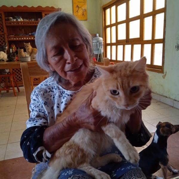 En los últimos años de su vida, Conchita reunió a docenas de gatos. La historia es breve: un gato, El Chamuco, raptó a una gatita pequeña y tuvo tres tandas de hijos. Después unas vecinas arrojaron a la casa de Conchita a tres gatas más. Ahí empezó la explosión demográfica.