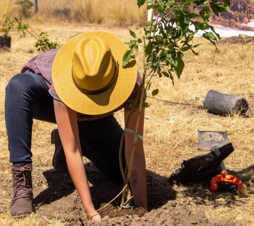 En esta zonas de Puebla sembrarán árboles