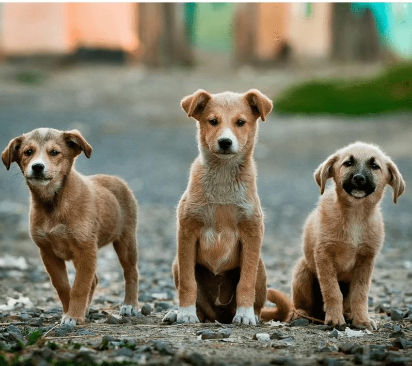 Lugares para adoptar perros y gatos en Puebla