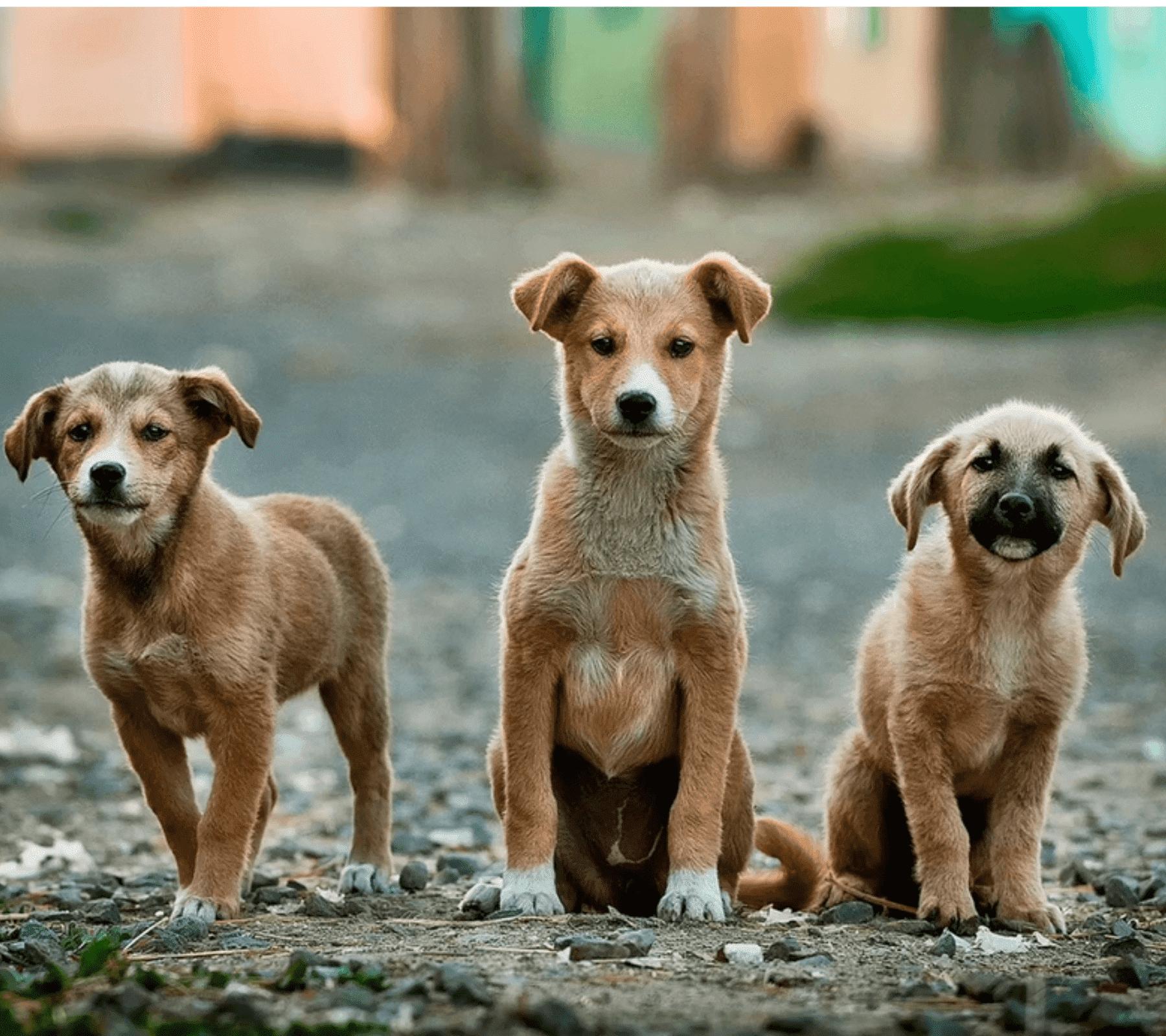 adoptar perros y gatos en puebla