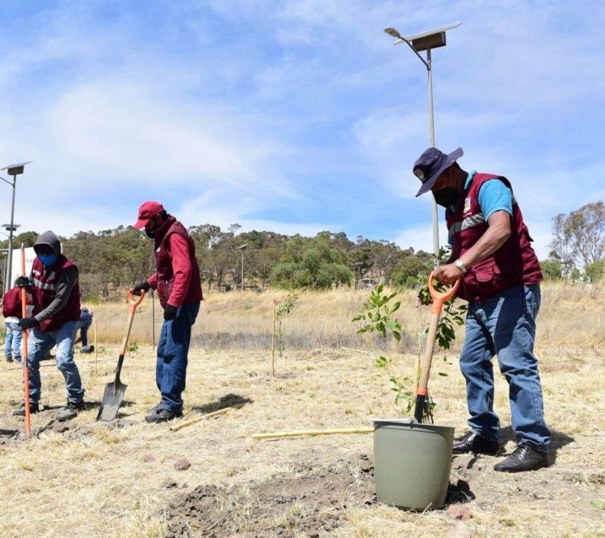 Sembrarán más de 10 mil árboles en la ciudad de Puebla