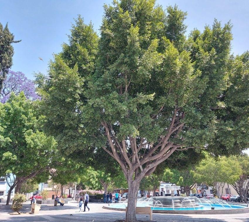 Van por siembra de 31 mil árboles en toda la ciudad de Puebla