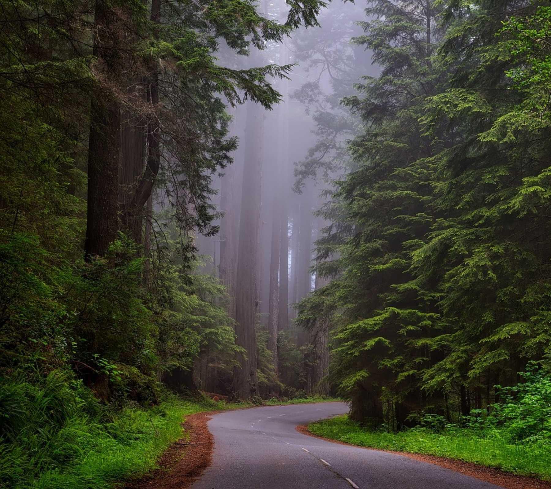 camino árboles neblina