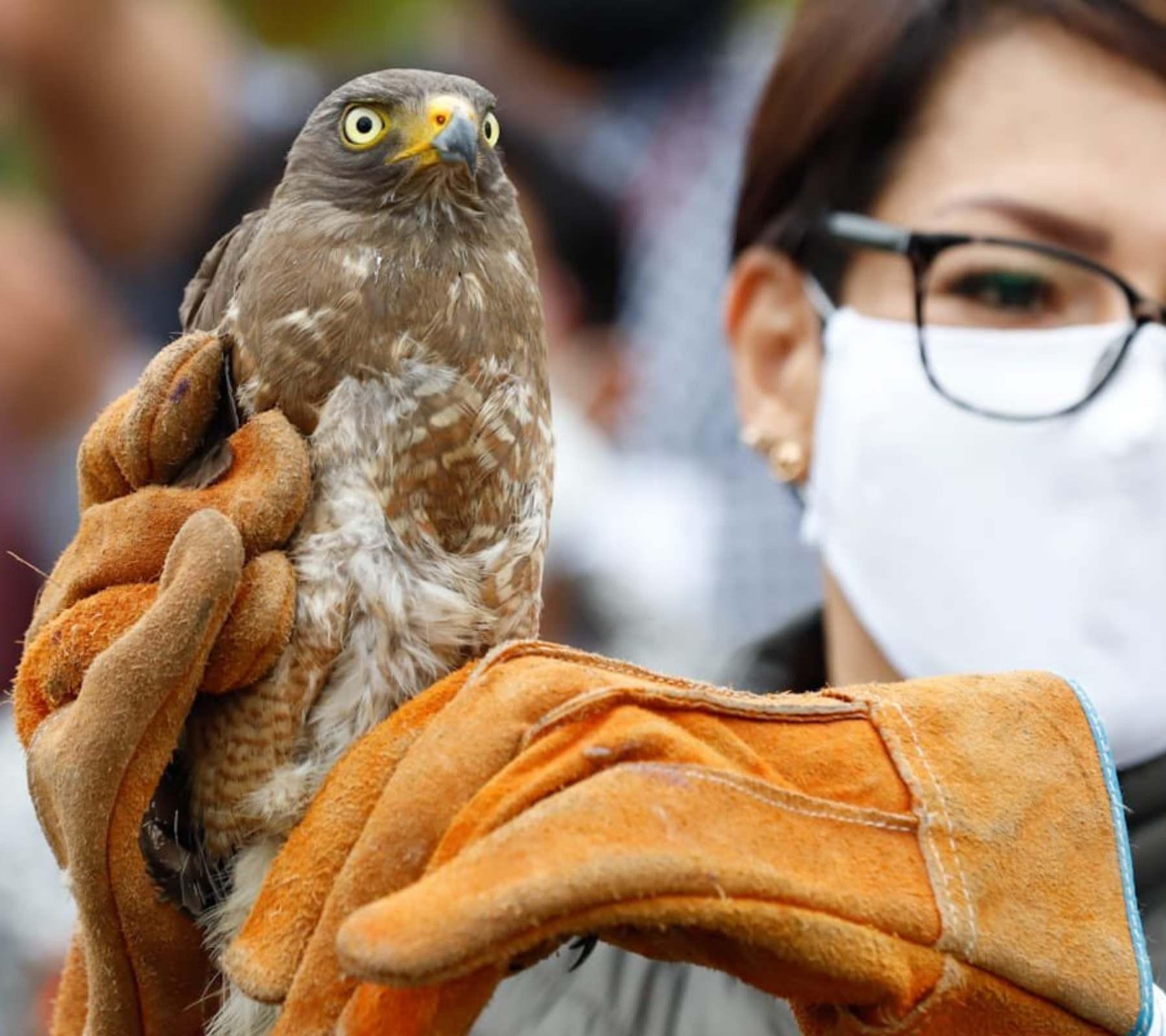 flor del bosque halcón rehabilitación especies portada