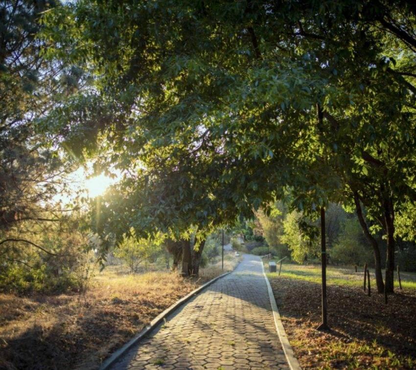 El Jardín Botánico BUAP es uno de los más importantes del país