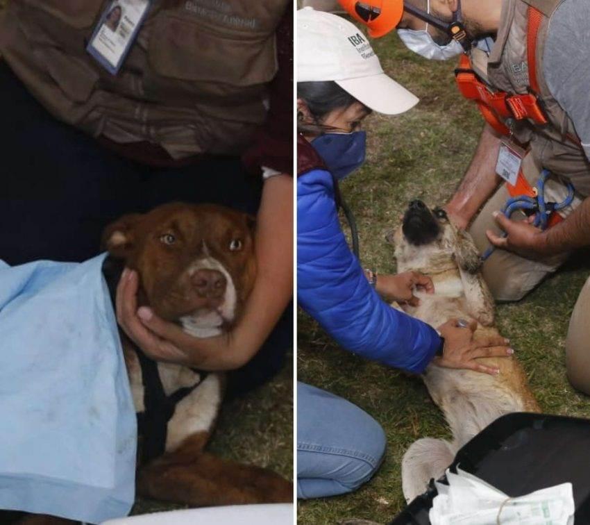 Rescatan a Spay y Spike, los perros que cayeron al socavón en Puebla