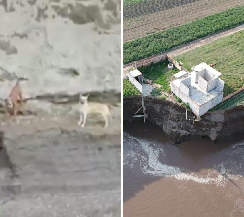 Organizaciones piden rescate de perros que cayeron en el socavón