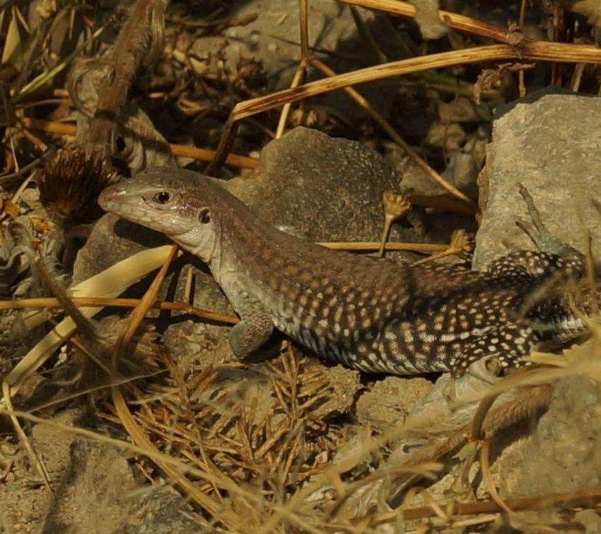 Reaparecen animales silvestres en Parque Cerro de Amalucan