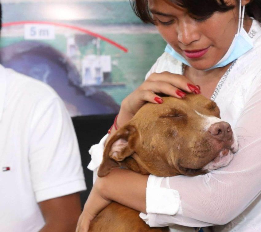 Spay, uno de los perros que cayó al socavón, se reencuentra con su familia
