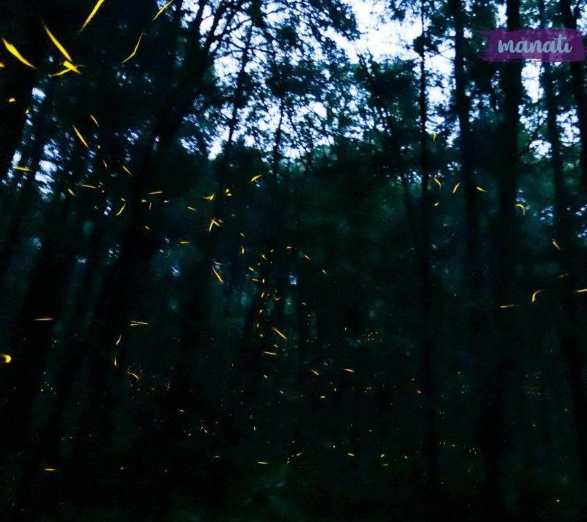 Luciérnagas de Tlaxcala en peligro por ecoturismo y actividad humana