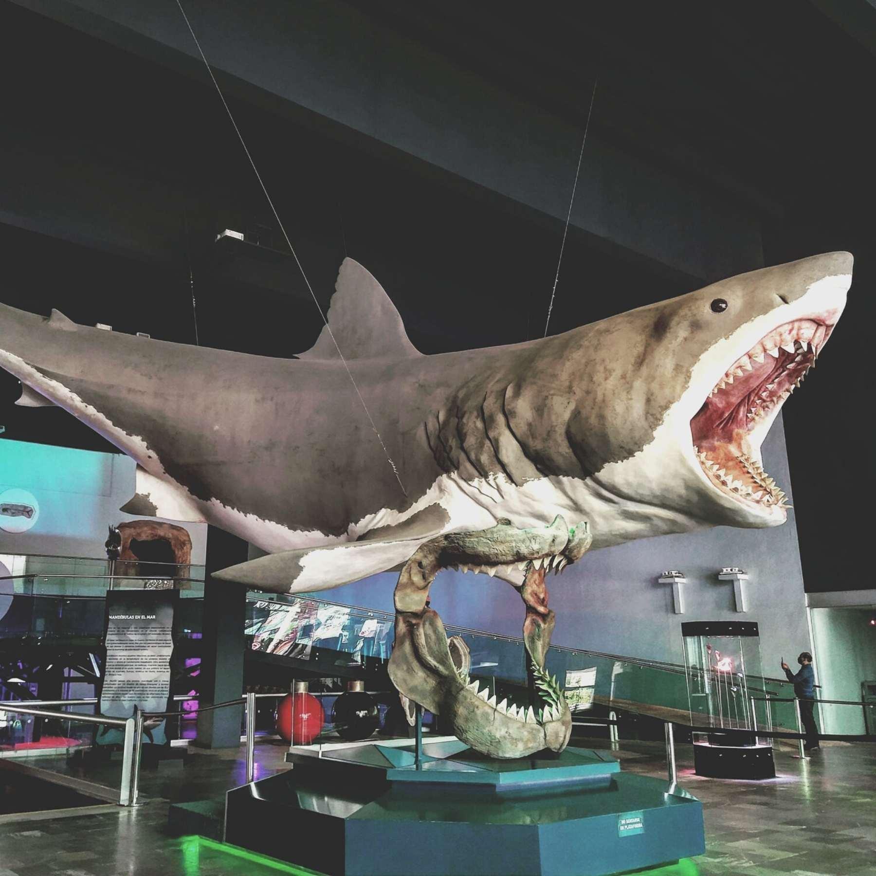 Si te lanzas a un recorrdidos de museos en Puebla, ve al Evolución