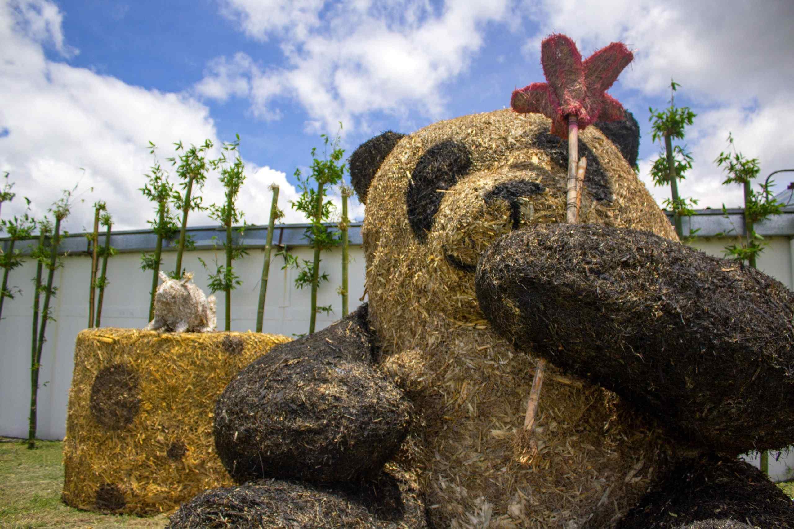 oso panda paja atlixco