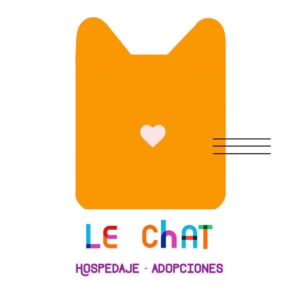 Aquí te incluimos una lista de lugares de adopción de gatos en Puebla por si estás interesado en incluir un michi a tu vida.