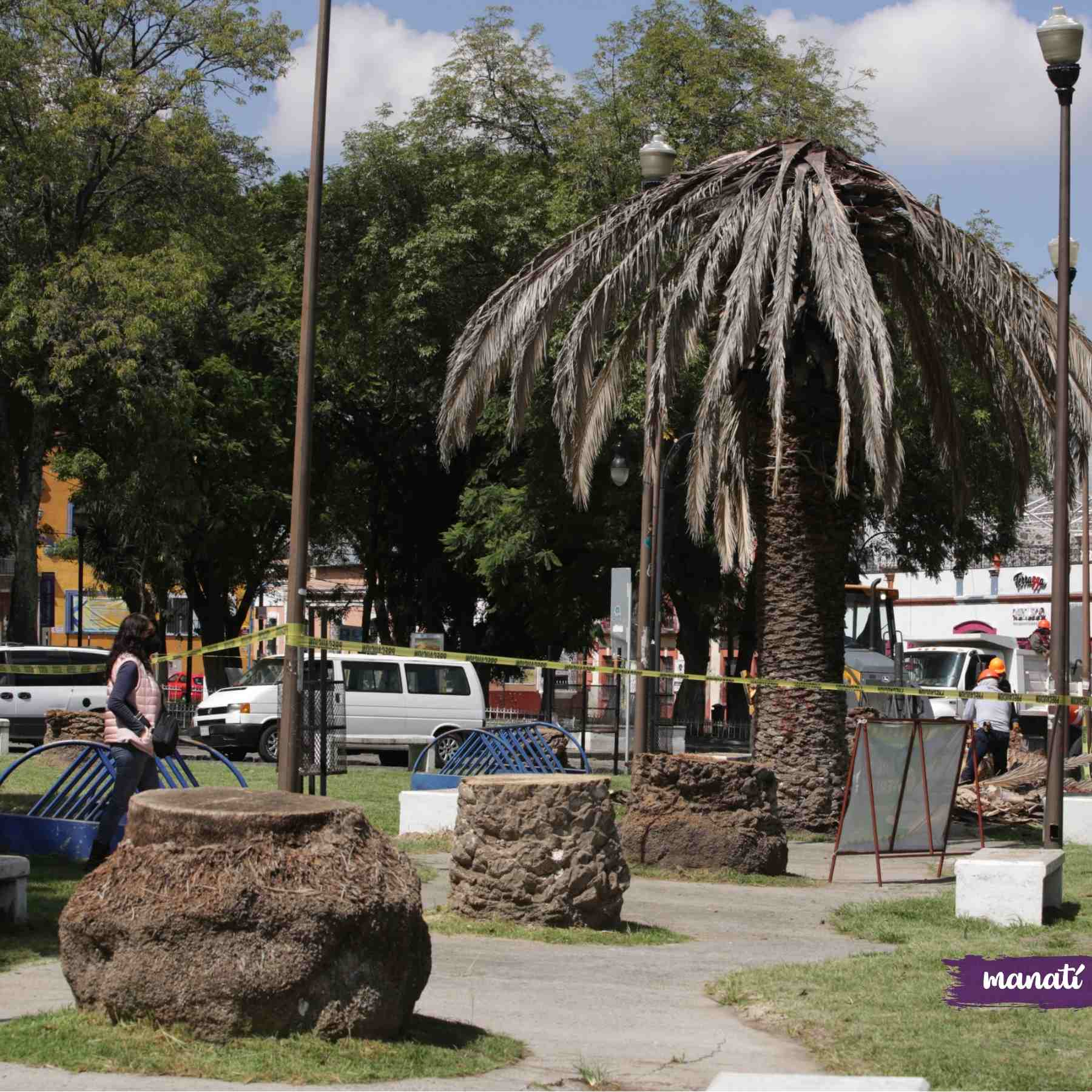 tala palmeras barrio analco