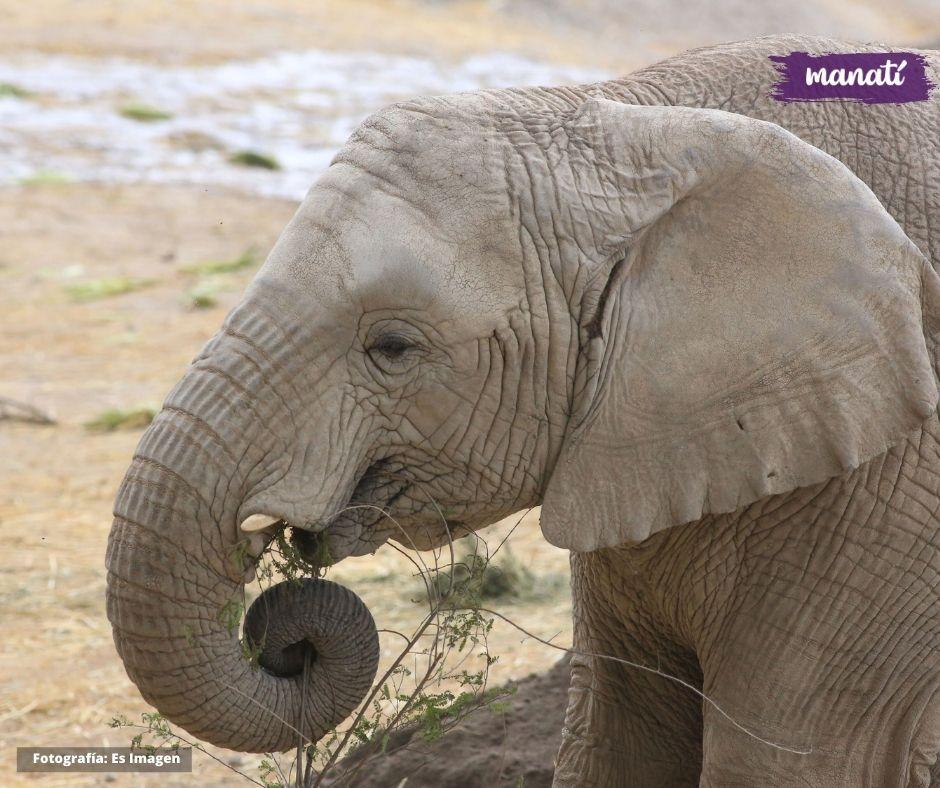 Africam Safari Fotografía: Agencia Es Imagen | @esimagen