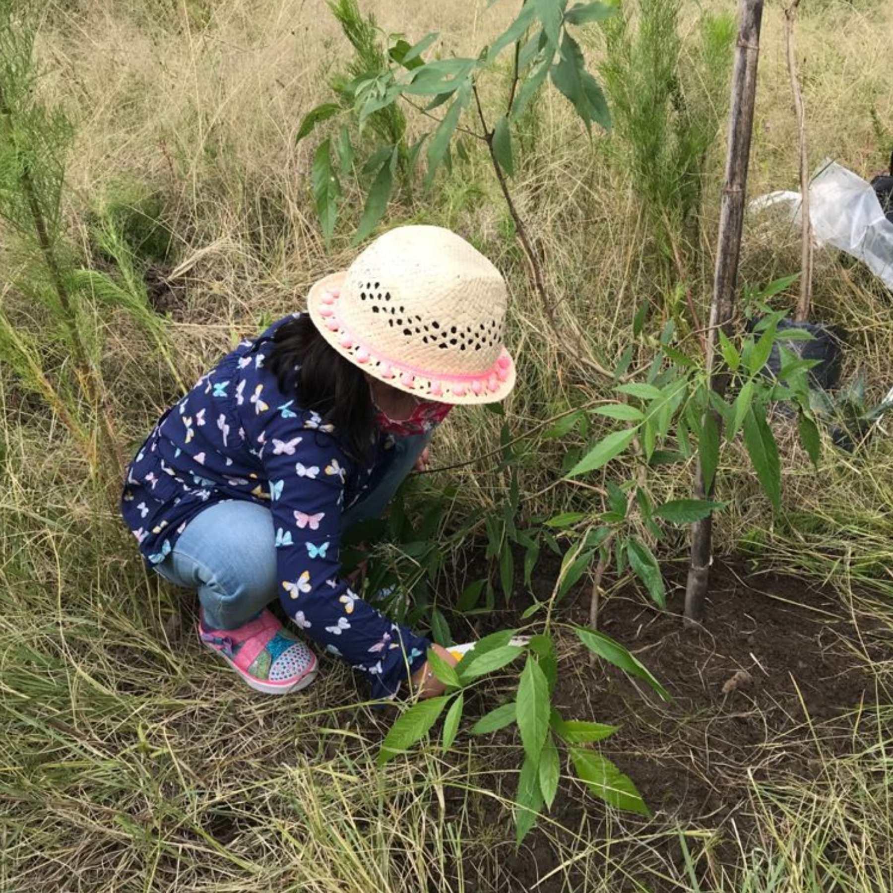 Siembran 200 árboles en el Parque Cerro de Amalucan